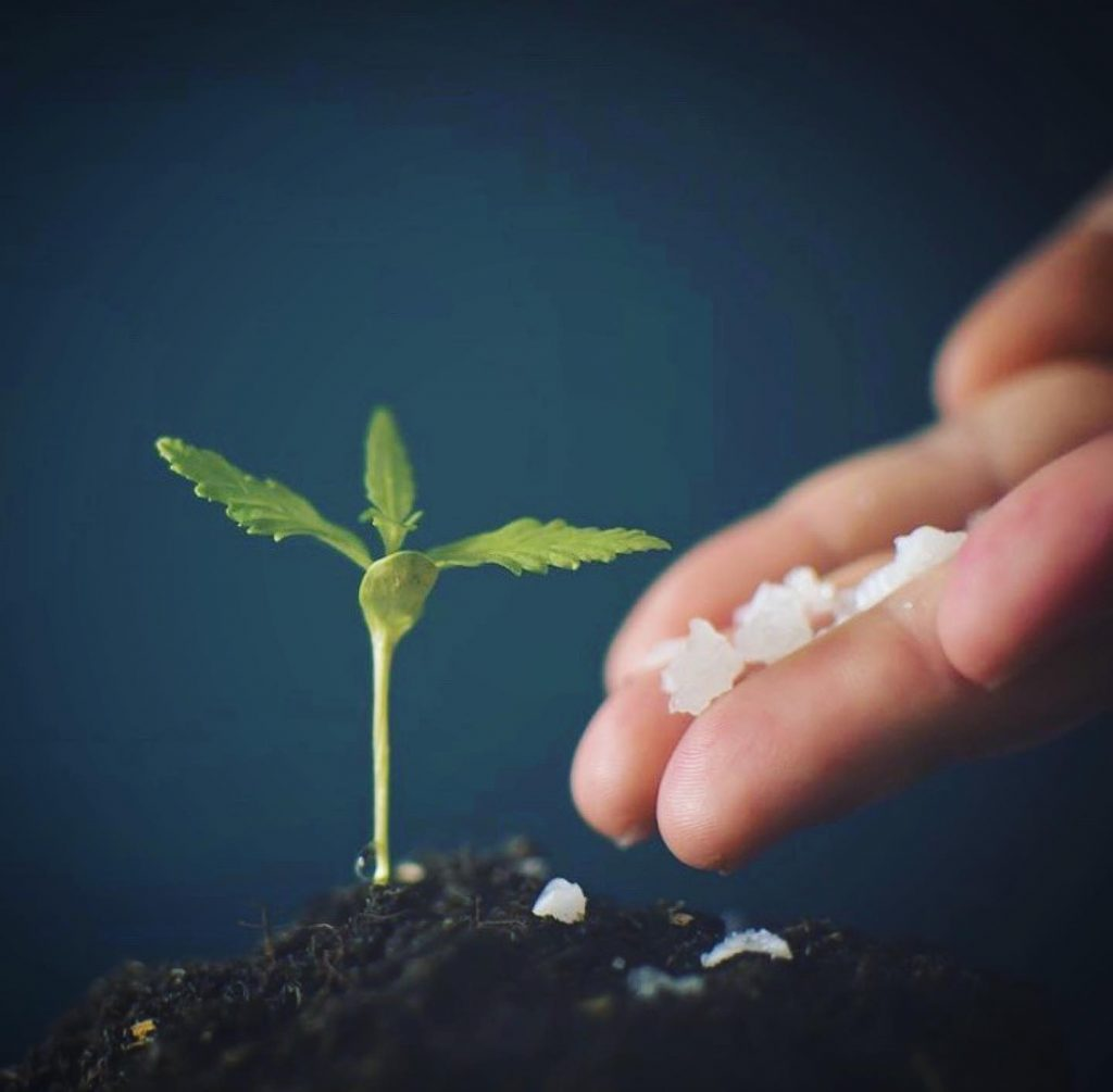 Fertilize the nutrients you need to get the most out of your cannabis.