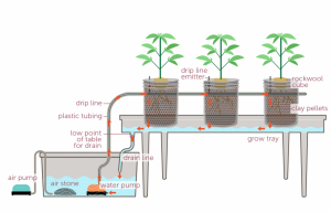 Cannabis cultivation hydroponics cultivation card