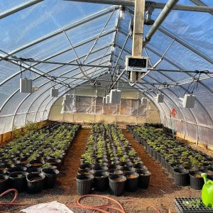 How to build and set up a greenhouse with outdoor marijuana plants